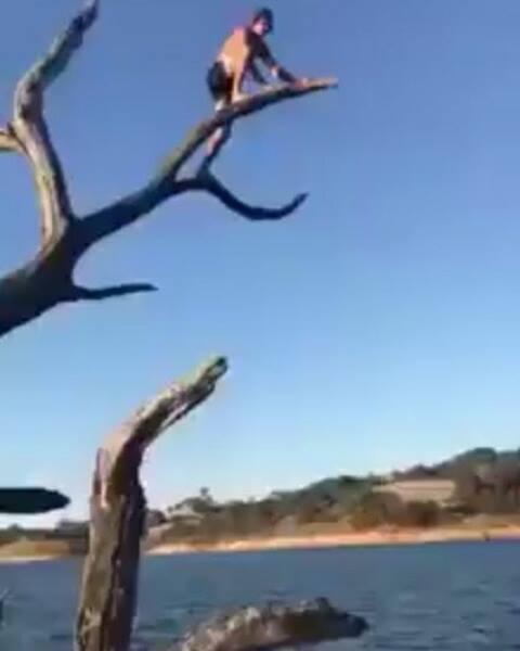 Idiota na árvore seca