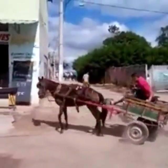 Verdadeiro cavalo de pau
