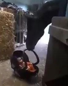 Amor de cavalo