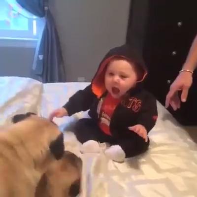 Bebê e Pug