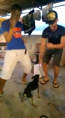 Sexta pra dançar cachorrada