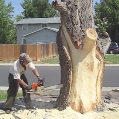 Escultura no tronco seco