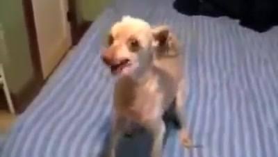 Cachorro tenta mandar recado