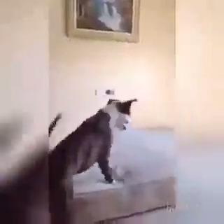 Cachorro brincando de pular