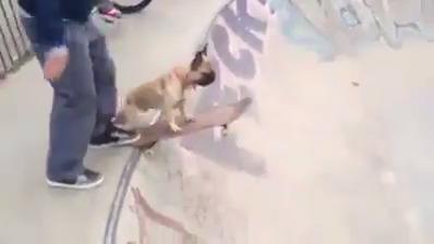 Cachorro esportista