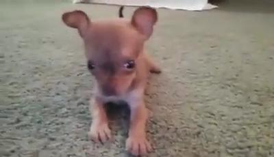 Cuidado cão bravo
