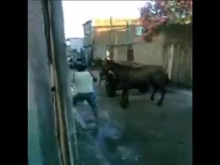 Cavalo se defende de Pitbull