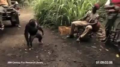 Macaco armado