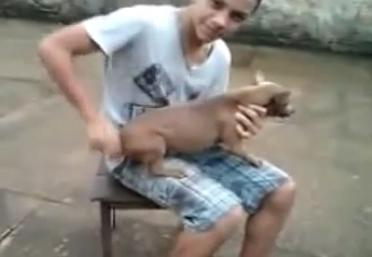 Dando corda no cachorrinho